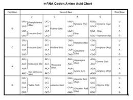 Amino Acid Translation Chart Translation Review Activity And Trna Cut Out Templates Protein Synthesis