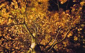 """Der tatort """"wer jetzt allein ist beginnt mit einer krimitypischen situation: Autumn And Rilke Keats Usw Penwithlit"""