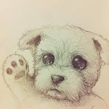 Small Picture 11 best cute animal drawings images on Pinterest Animal drawings