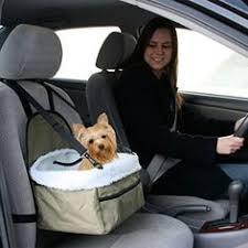 Автокресла для собак: лучшие изображения (46) | Автокресла ...