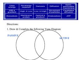 Endocytosis Vs Exocytosis Venn Diagram The Cell Membrane And Movements Of Molecules The Plasma Membrane The