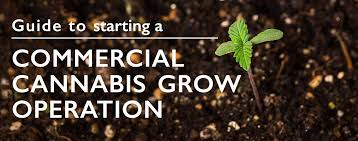 Operation Weatherport Guide A Starting To Cannabis Grow Commercial wfqROAxq6