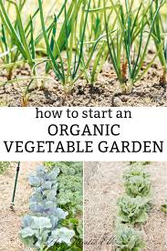 ready to start your own organic vegetable garden this year but aren t sure where to begin this will take you step by step from planning to planting so you