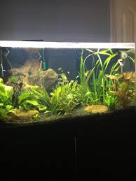 planted tank lighting question