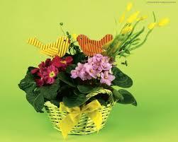 Basket Flower Decoration Flowers Easter Flowers Decoration Still Life Beautiful Basket
