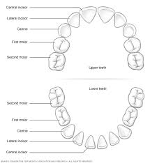 Children S Tooth Chart Letters Baby Teeth Mayo Clinic