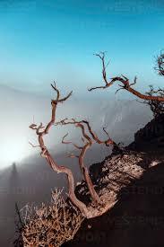 Indonesia, Java, Ijen volcano, close up of barren tree - KNTF03519 -  Konstantin Trubavin/Westend61