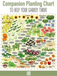 Vegetable Companion Planting Charts 34 Best Companion Planting Chart Images In 2019 Companion