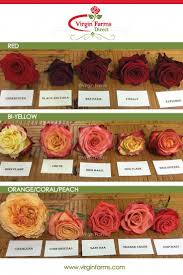 Plant Tycoon Flower Chart Rose Variety Comparison Chart Red Bi Yellow Orange Coral