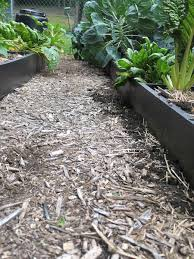 garden wood chips in paths