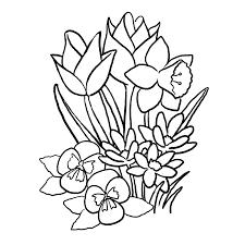 Leuk Voor Kids Lentebloemen Tulpen En Narcissen