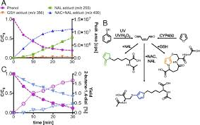 Uv Light Oxidation Unexpected Transformation Of Dissolved Phenols To Toxic