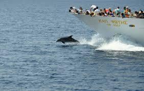 Αποτέλεσμα εικόνας για δελφινια καραβακι αγιον ορος