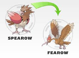 Pokemon Spearow Evolution Chart Free Download Pokemon What Level Does Spearow Evolve Hot