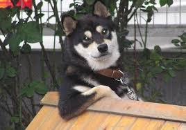 Dogs | Know Your Meme via Relatably.com