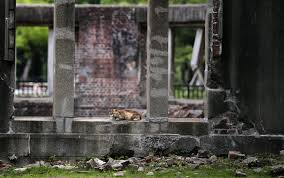 ap photos hiroshima after the atomic bomb and today wtop a bomb hiroshima photo essay in this 3 2015 photo a stray cat rests at now known as atomic bomb dome in hiroshima western on aug