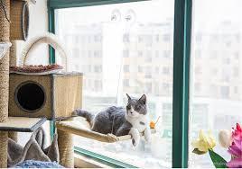 Großhandel Sommer Katzenbett Aalen Fenster Hängematte Barsch Kissen
