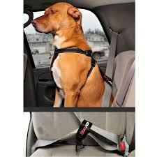 dog seat belt restraint