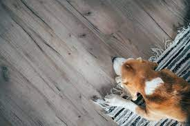 wood flooring for dogs