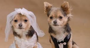 """Résultat de recherche d'images pour """"photo de marier et chat"""""""
