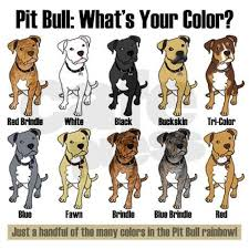 American Pitbull Terrier Feeding Chart Pin On Animals