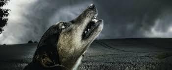 Apoquel: Dog Drug With a Dark Side