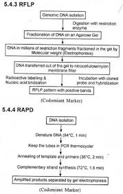 words essay on molecular markers clip image002
