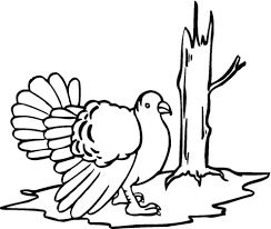 wild turkey coloring pages.  Pages Wild Turkey Coloring Page With Coloring Pages E