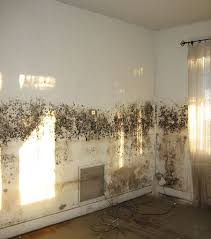 Charming Mould On A Wall Can Be Cured By Never Paint Again