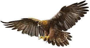 Resultado de imagen para imagenes aves de cestreria cazando