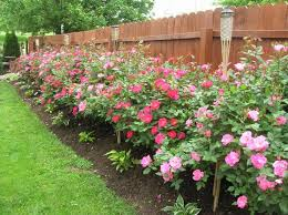 Small Picture 90 best roses garden images on Pinterest Climbing roses Gardens