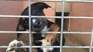 Pour ses 175 ans, la SPA lance une campagne positive en hommage aux animaux de compagnie