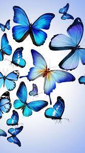 Blue Butterflies Wallpaper iPhone ...