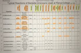 Dichotomous Flow Chart Microbiology Solved Create A Flow Chart Dichotomous Key For The Follow