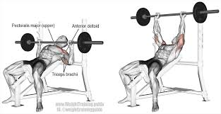 Top 5 AssistanceAccessory Exercises For The Bench Press  Elite FTSBench Press Chains For Sale