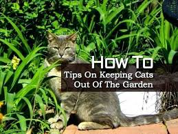 how to keep cats out of the garden. How To Keep Cats Off Your Garden Prissy Design Keeping Out Of Delightful Ideas . The