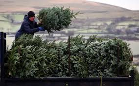 When Should You Put Up Your Christmas Tree And Should You Buy Real When Should You Buy A Christmas Tree