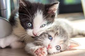 cute kittens and puppies quotes. Simple Kittens Inside Cute Kittens And Puppies Quotes E
