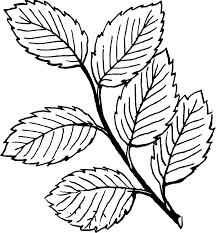 Small Picture Printable Leaf Coloring Pages For Kids Colorear otoo