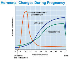 Stages Of Pregnancy Symptoms Of The Mother Kat Dineen