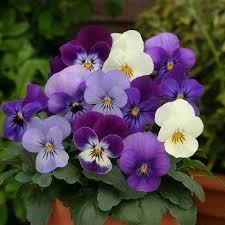 Αποτέλεσμα εικόνας για λουλουδια φωτο