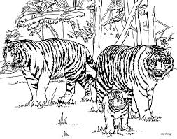 Small Picture Tiger Drawings For Kids Coloring Home