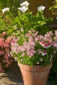 Více Než 25 Nejlepších Nápadů Na Pinterestu Na Téma Winter Container Garden Ideas Uk