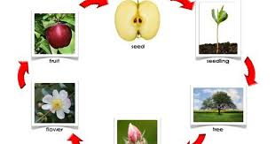 Life Cycle Of Apple Control Chart Pdf Fall Preschool