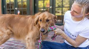 Best training tools for new dog parents ...