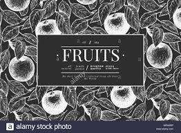 Family Tree Design In Illustration Board Apple Branch Design Template Hand Drawn Vector Garden Fruit