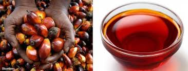 Image result for Three Brilliant Palm Oil Business Trading Ideas – How To Start Palm Oil