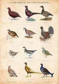 Vintage British Game Bird Chart Limited Edition Art Print