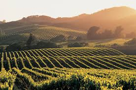 best all inclusive tour napa valley wine country tour from san francisco