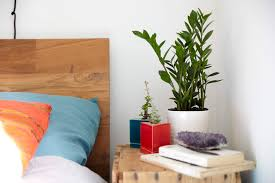 Should You Keep Plants in Your Bedroom? Casper Blog
